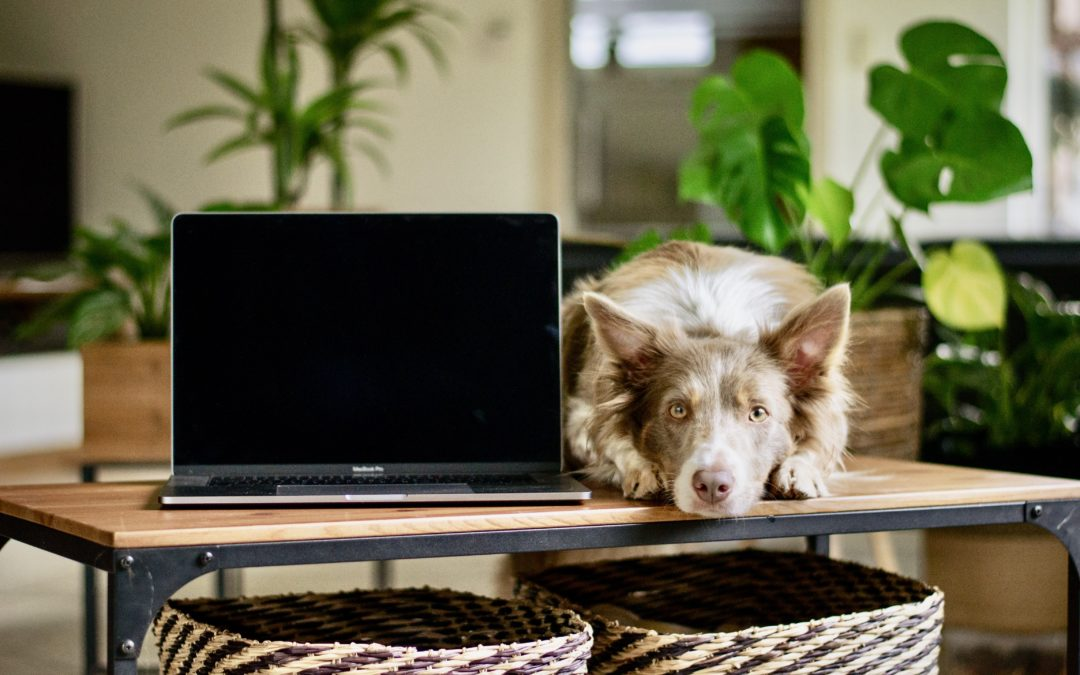 Working from Home: Advice from an ERP Consultant